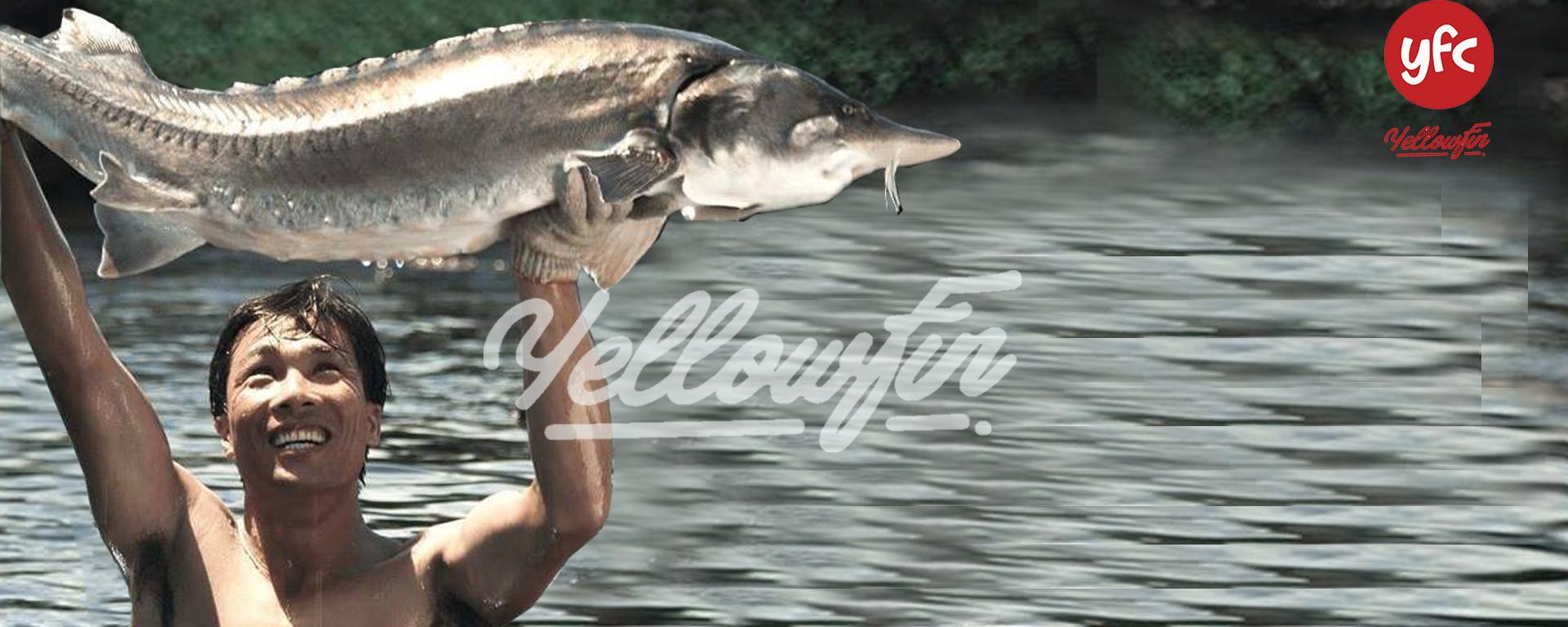 Cá tầm tươi sống