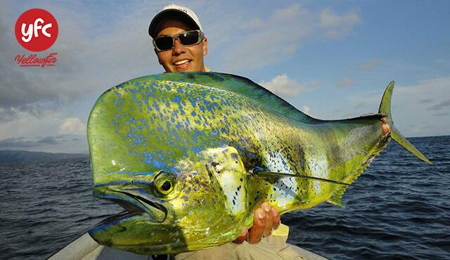 YFC FOOD cung cấp cá MahiMahi (Cá Nục Heo)