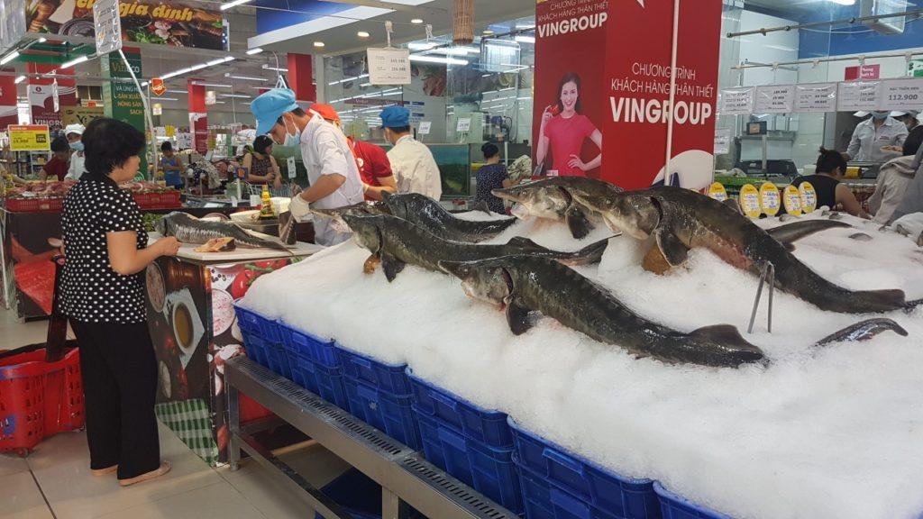 cá tầm nga khủng yfc vinmart 1
