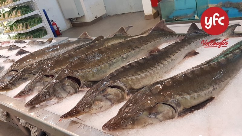Cá tầm Khủng YFC tại Vinmart